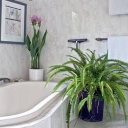Кои цветя са подходящи за баня
